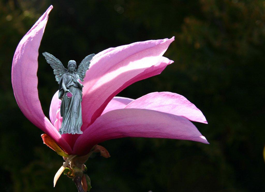 Engel in Blüte – Budapest
